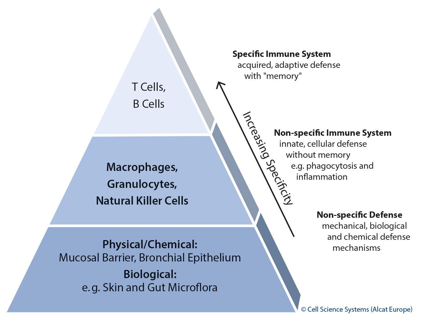 Structure immune system